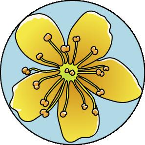 fleur de Bach floribach agrimony