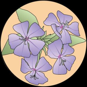 dessin fleur de bach floribach plumbago cerato