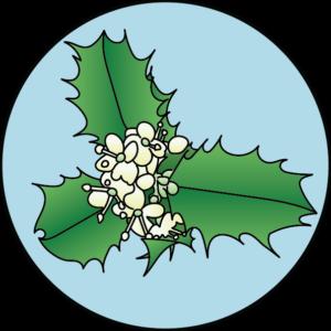 dessin fleur de bach floribach houx holly