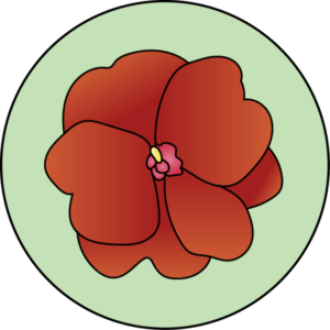 dessin fleur de bach floribach impatiens