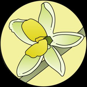 dessin fleur de bach floribach olive olivier