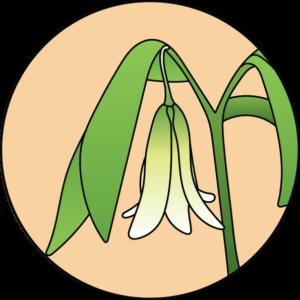 fleur de bach floribach wild oat