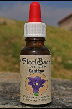 fleur de bach floribach 12 gentian