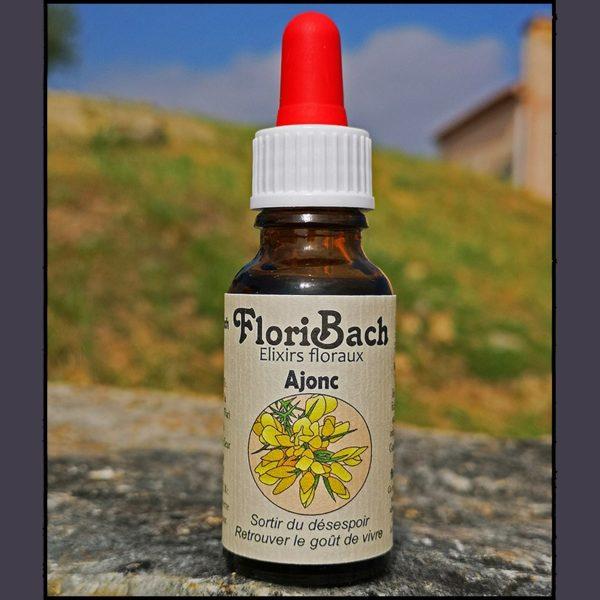 fleur de bach floribach 13 gorse ajonc