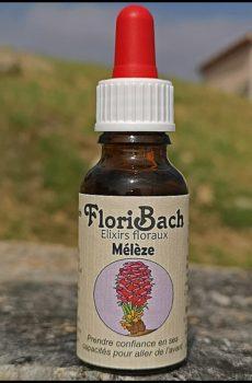 fleur de bach floribach 19 larch meleze