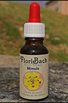 fleur de bach floribach 20 mimulus
