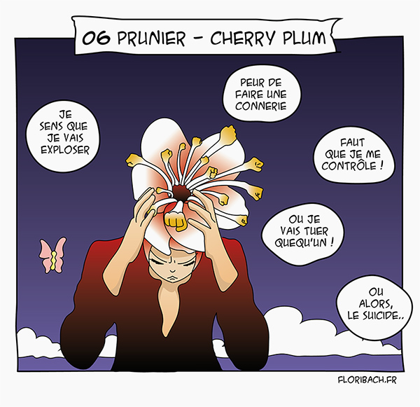 BD dessin fleur bach prunier cherry plum